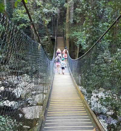Minn rainforest June 17 walk